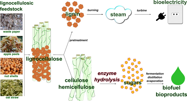 The Biofuel Process
